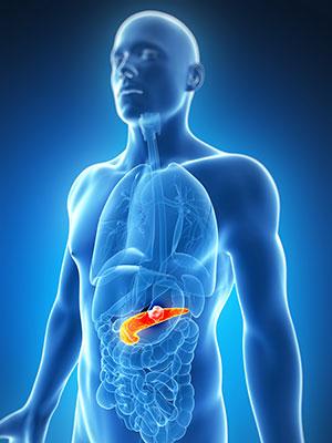 pancrea